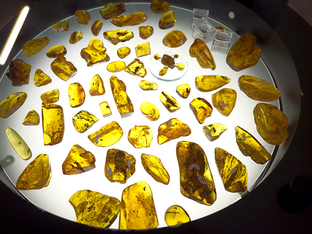 Light table at the Amber Gallery and Museum in Vilnius, Lithuania displays polished amber pieces with inclusions of small animals and vegetation