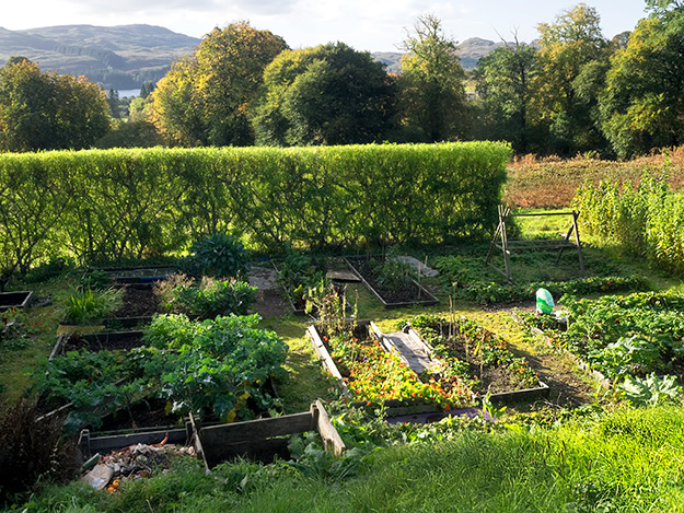 The organic garden at EcoYoga Scotland
