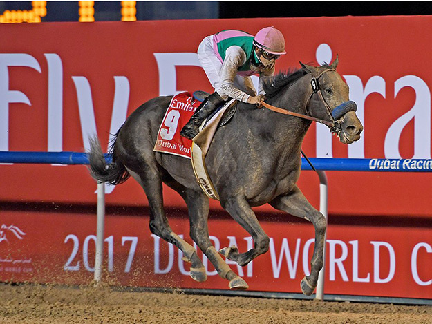 Arrogate (USA) wins the Dubai World Cup at Meydan on March 25, 2017 (Photo credit: Dubai Racing Club, Andrew Watkins)