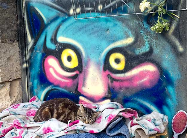 My favorite piece of street art in Jerusalem, real kitten curls beneath a psychedelic cat mural in the Even Israel neighborhood