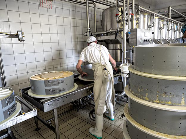 Molds of curd at Fruitiere of Bouverans will now start the process of ageing