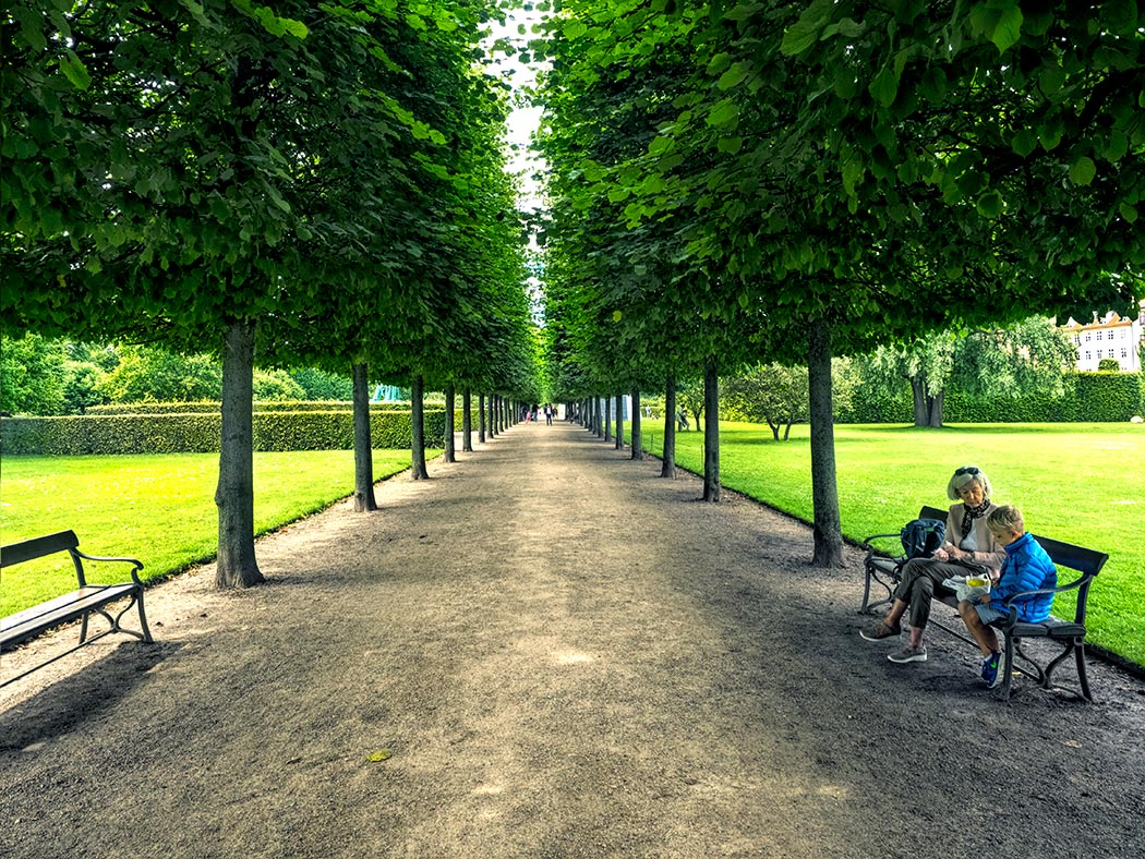 Boulevard of trees in King's Garden in Copenhagen, Denmark