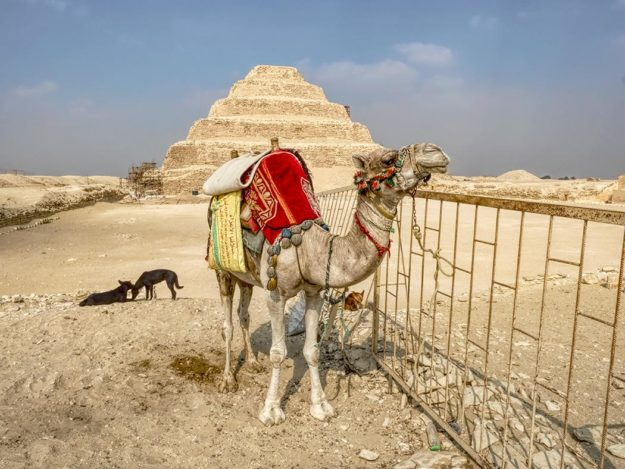 Camel strikes a pose before the Step Pyramid of Djoser, just a twenty minute ride from Giza, Egypt