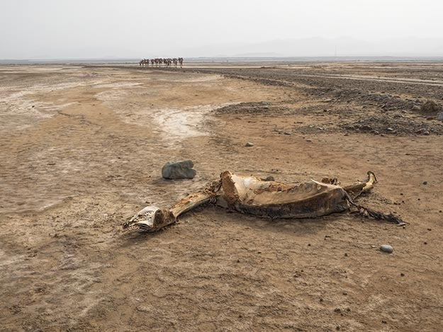 Life in the desert is brutal, as this carcass of a camel clearly demonstrates