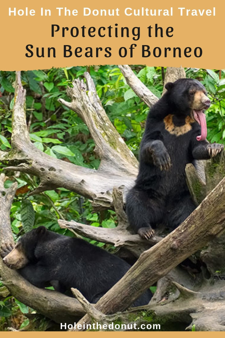 The Bornean Sun Bear Conservation Center provides a safe and secure home for the endangered Sun Bears of Borneo, the smallest bear in the world.