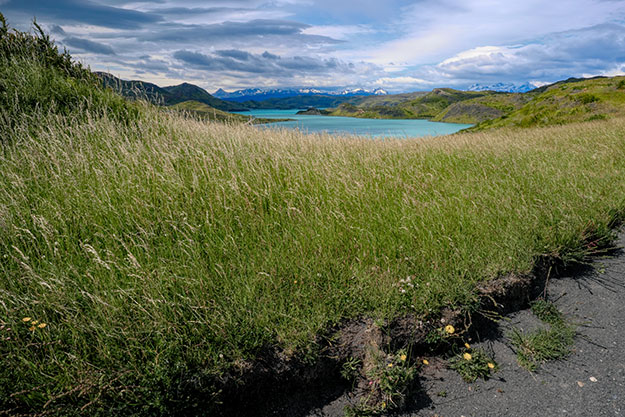 The exquisite turquoise Peohé Lake peeks above tall grasses in Torres del Paine National Park