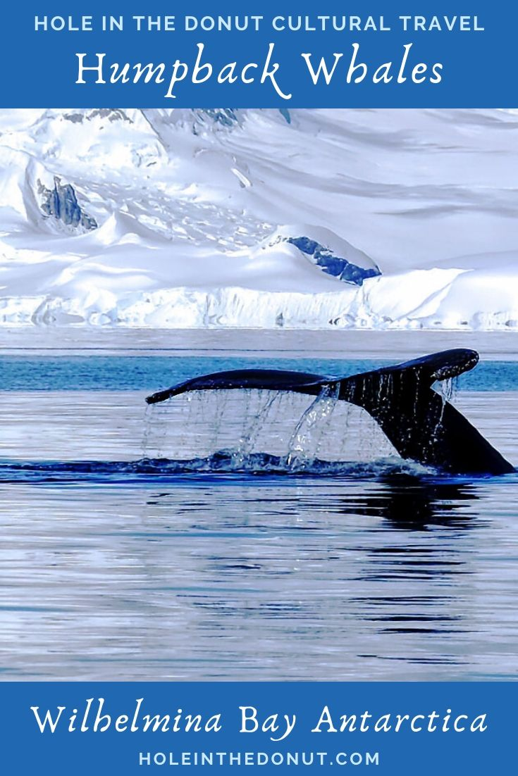Humpback Whale Tail in Wilhelmina Bay, Antarctica