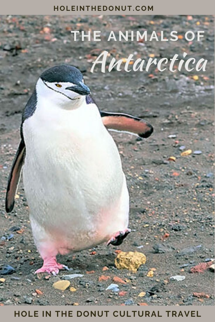 VIDEO: Escapades with the Animals of Antarctica
