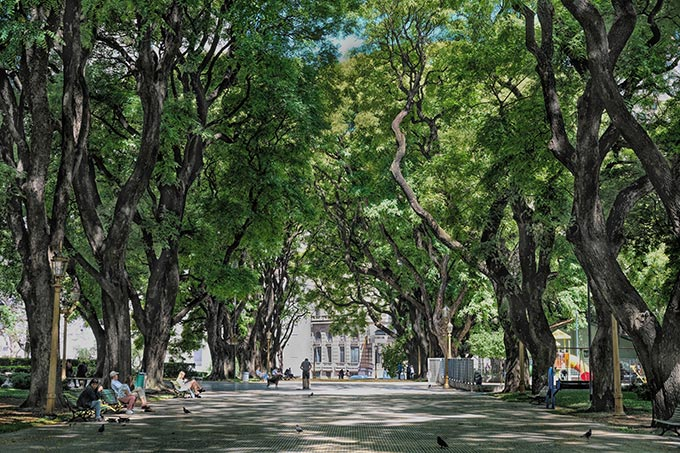 Walkways are shaded by a canopy of trees at Plaza San Martin