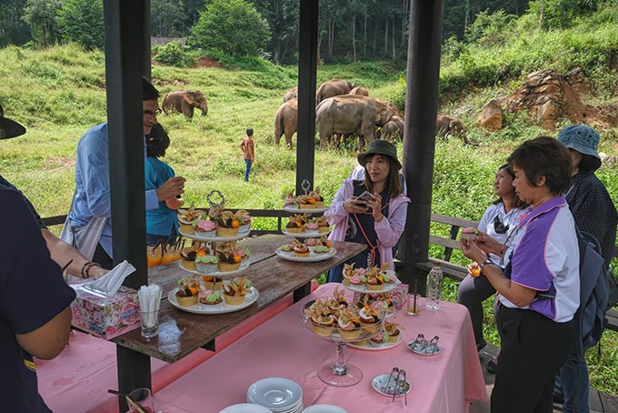 Viewing the elephant herd from a raised pavilion at Patara Elephant Farm