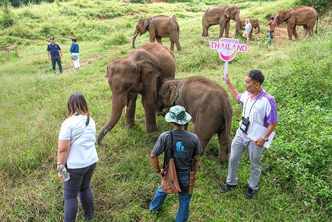 Interacting with the herd in the jungle at Patara Elephant Farm in northern Thailand