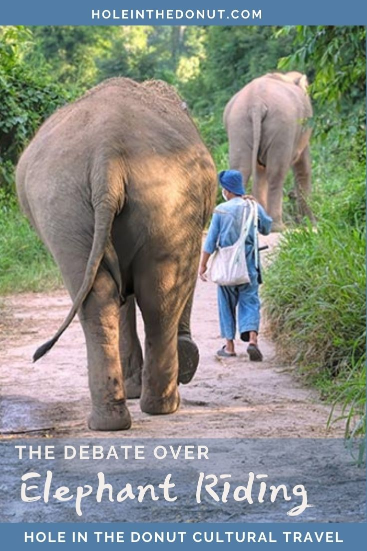 Elephant Tourism - To Ride or Not to Ride, That is the Question